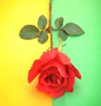 roos.groengeel